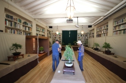 Native California bonsai tree exhibit