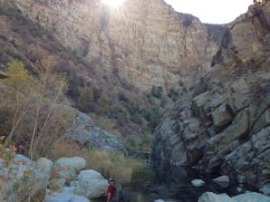 thenarrows